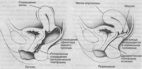 Что происходит оргазма у женьщин
