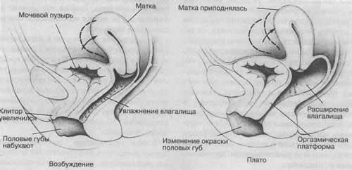 seks-s-volosatoy-russkoy-pizdoy