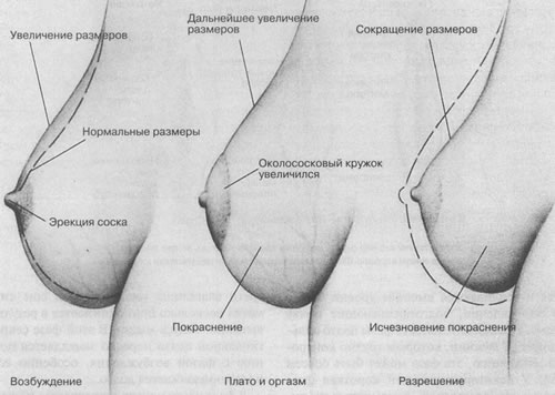 Выдиления во время возбуждения и оргазма