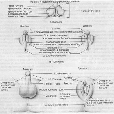 vyacheslav-volodin-seksualnaya-orientatsiya